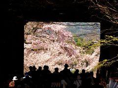 今年の花見は醍醐の桜から。