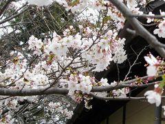 神野公園 (桜を求めて)