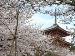 【京都桜2011】 ~美しき日本の風景~ 「清水寺」