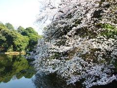 春爛漫の新宿御苑♪