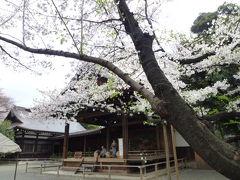 東京の桜めぐり♪ Vol1 北の丸公園と靖国神社♪