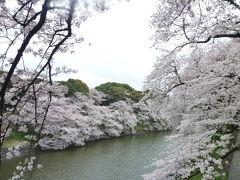 東京の桜めぐり♪ Vol2 絶景!千鳥ヶ淵の満開桜♪