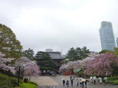 東京の桜めぐり♪ Vol3 桜の増上寺と雨の築地