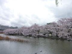 東京の桜めぐり♪ Vol5 上野公園と不忍池♪