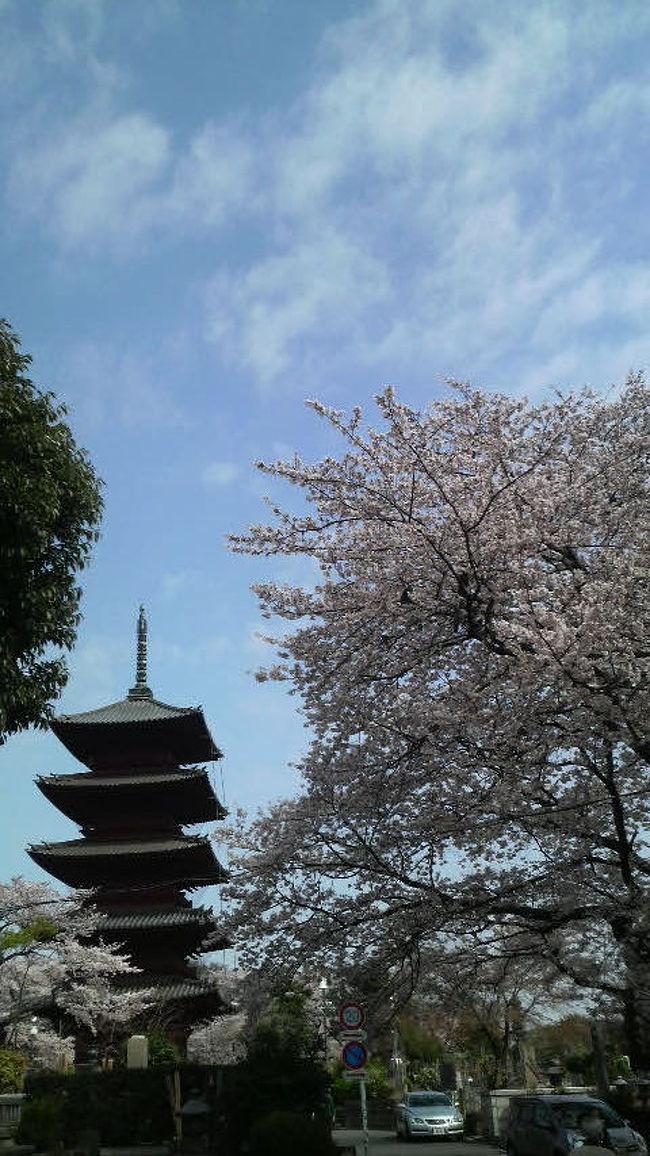 今月はとにかく忙しく心身ともに疲れています。せめて気持ちだけでも気分転換が必要と仕事の前後に都内・城南地区の桜の名所を訪れてみました。今年は花見も自粛が多いですが、花の盛りを愛でる気持ちだけは失いたくありませんね。被災地にも春が訪れますように。