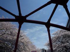 桜と赤い橋