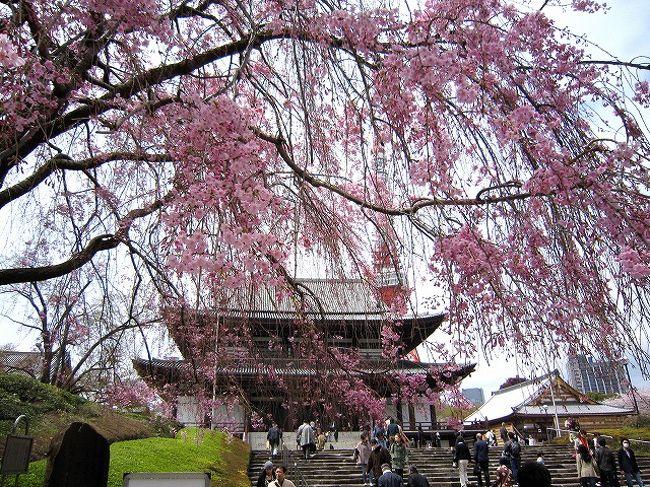 今話題の江姫のお墓のある増上寺に<br />桜も満開、ちょっと散ったくらいかな?<br />お花見では初めて来ましたが<br />バックに東京タワーが入り、なかなか良いところです<br /><br />そのまま東京タワーから麻布に歩き<br />そこからは地元の「ちいばす」に乗りました<br />1回100円ですから気軽です<br /><br />家に帰って自転車で近所の桜めぐり<br />買ってからちょうど1年で<br />変なきしみ音が気になります<br />久々に点検するか?<br />チェーンを洗って、ブレーキを調整<br />でもきしみ音の原因はどこか分らない<br />しかたないから各部分の増し締め<br />うむっ!サドルステムのボルトが少し締まる<br />まさか?試し乗りすると<br />音がない、新しい自転車に乗ったよう<br />快調です!!<br />まことにお恥ずかしいことで・・・<br />思いおこせばサドルを交換したころから音がしたかな?<br />