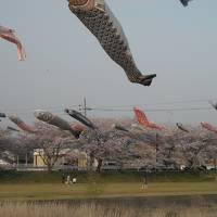 2011・4・温泉でほっこり&花見三昧旅行INあわら温泉美松・後編