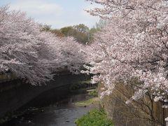 世田谷区 祖師谷公園:ワシントンからの 「里帰り桜」と 化学者・高峰譲吉