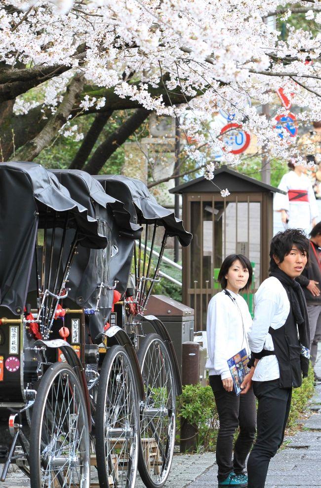 休日を利用した京都の花見旅行。<br />前日はあいにくの雨でしたが、今日は雨もやみ午後からは晴れ間も見えるとのこと。<br />それならと、八坂神社あたりからゆっくり歩いて清水寺まで、適当にぶらぶら観光していくことにしました。<br /><br />