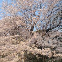 四季の花を旅するシリーズ 我が家の庭シリーズ 4月編