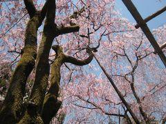 平安神宮でお花見~祇園まで いっぱい歩いたからパフェ食べちゃお