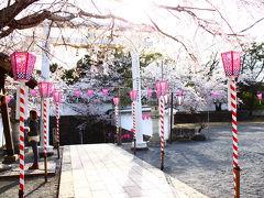 桜(森山~大村公園)