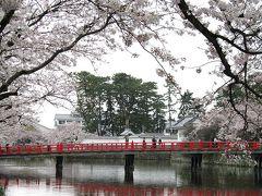 小田原城のお堀端 桜満開!