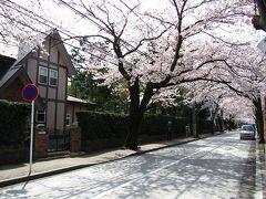 小田原 西海子小路の桜並木