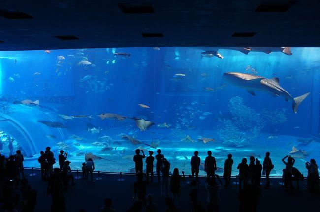 2年ぶりの沖縄旅行。<br /><br />2日目、「沖縄美ら海水族館」の写真を投稿します。