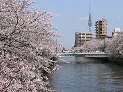 桜さくら 大横川~仙台堀川編
