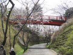 小見川城山公園から成田市さくらの山に花見のはしごをする   その1 小見川城山公園