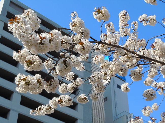 今年は、長く桜を観ることができました。<br />初めは、3月20日に彼岸桜から・・・。<br />今日は、4月10日の深大寺と野川 <br />そして、三鷹通りの桜をちょっとだけ。<br />最期の一枚は、昨日の夕暮れです。<br />たくさん、今年は桜を撮りましたが、なかなかまとめることができないまま・・・。<br />もう、新緑が綺麗な時になってきました。