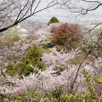 弘川寺の西行桜