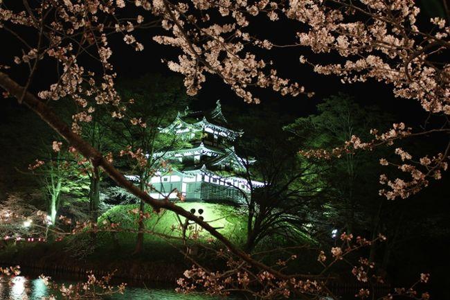 日本三大夜桜のひとつ高田公園の夜桜を見に行ってきました。<br />新潟市内から高速利用で約2時間でした。<br />東京からでも約3時間半で来られるようです。<br /><br />この日は朝は雨が降っていて、昼過ぎには雨が上がりました。<br />午後4時まで家にいなければならない用事があり、<br />午後4時半に家を出発したため、ほんとに夜桜だけの見物になりました。<br />どうせなら昼の桜も見たかったです。<br />この日の桜は満開の一歩手前の七分咲きぐらいでした。<br />でも、翌週は雨が多いようなので、行くならこの日なのかも。<br /><br />この日はとても寒く、昼間も11度くらい、夜は7度くらいと<br />冬のような寒さでした。