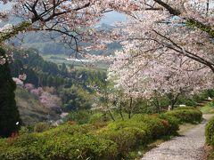 春の肥後路をゆく【1】~桜咲く熊本近郊と山鹿温泉~