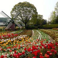 兵庫県立フラワーセンターのチューリップと神河町のミツマタ
