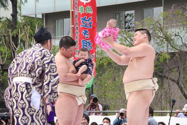 GW2日目、浅草寺の「泣き相撲」と根津神社のつつじ祭りを楽しませてもらいました。<br />浅草寺の「泣き相撲」は、今年で21回目だそうですが、九代目市川団十郎の「暫(しばらく)」像復原を記念して始められたもので、赤ちゃん同士がその泣き声を競います。歌舞伎十八番の「暫」は強い稚児を題材にしたお芝居で、子どもが丈夫で健康に育つ事を祈って行われます。相撲の取り組みが始まる前から泣きだす赤ちゃんや、全然泣かずに行司や審判員泣かせの赤ちゃんに見物客の笑いが絶えませんでした。<br />「泣き相撲」を楽しんだ後は、浅草雷門前から台東区循環バス「めぐりん」に乗り千駄木まで行き、根津神社のつつじを楽しみました。