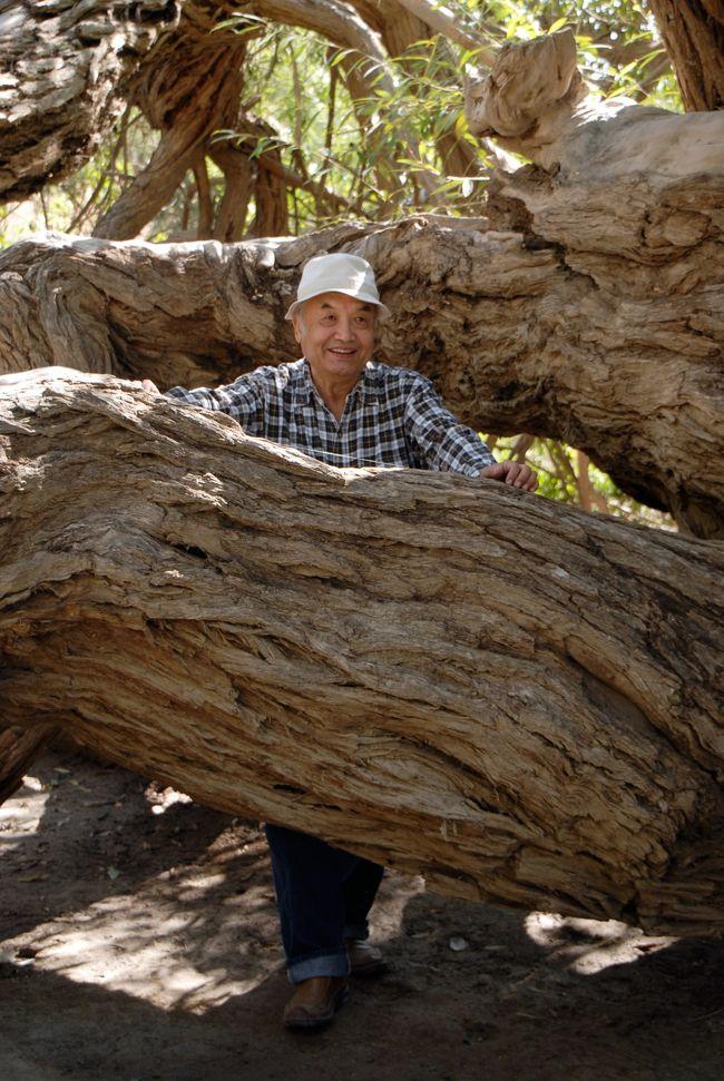 9月27日の続きです。<br />さて、千年胡楊王を見た後、次は「千年柳樹王」だそうです。<br />字の如く、柳の木の王様ですが、これも1500年以上の樹齢だそうです。<br /><br />その前に、昼食の手配をしてくれましたが、政府高官の彼ら、地元村の役人に連絡して、維吾爾人農家での家常菜を振る舞ってくれると言います。<br />でも、きっと「家常菜」などではなく、村民でも余程の儀式などがない限り、口に出来ないようなご馳走なんだと思います。<br />そう言う感じの、権力の横行による食事だったらいやですけど・・・<br /><br />では、次の出会うおじいちゃんの「千年柳樹王」は、果たしてどんな柳なのでしょうね!