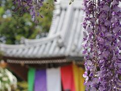 藤の香り漂う関西花の寺!地蔵寺