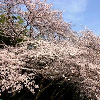 桜はとっくに咲いた~が,パラオはまだかいな?!ま~だだよ~!と,何気に出し惜しみで後楽園編