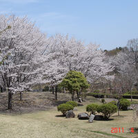 磯部桜川公園でお花見 [2011](1)