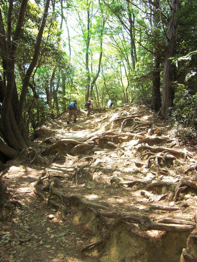 2011年1月、「山ガールになる!」と宣言してから早4ヶ月。<br />いやっほぅ〜!やっと山登りの季節が来た〜♪<br />気合は十分だけど、超初心者な私がいきなり奥穂高岳なんか攻めれるはずもなく・・・。<br />まずは足慣らしということで高尾山へ。<br />ケーブルカーを使わなければ2時間弱の山登り。<br />小学生のとき遠足で登ったし楽勝楽勝♪と思っていたら・・・<br />息も切れ切れ、足はプルプル。<br />日頃の運動不足を痛感することになったのでした。<br />侮るなかれ、高尾山。<br /><br /><br />【今回のコース】<br />-------------------------------------------------<br /><時刻>   <場所> ※( )内は滞在時間<br />-------------------------------------------------<br />11:35       高尾山口駅到着<br />           ↓<br />11:45       登山スタート(稲荷山コース)<br />           ↓<br />12:20〜12:35 稲荷山展望台(15分)<br />          ↓<br />13:30       高尾山山頂<br />          ↓<br />            1号路で下山<br />          ↓<br />13:50〜14:10 高尾山薬王院(20分)<br />          ↓<br />14:10〜14:40 もみじや(30分)<br />          ↓<br />14:55〜15:10 かすみ台展望台(15分)<br />          ↓<br />15:20       リフトで下山<br />          ↓<br />15:30       山麓駅到着<br />------------------------------------------------- <br /><br /><br />【お役立ちサイト】<br />・高尾山公式HP http://www.takaotozan.co.jp/<br />・とことこ高尾山 http://www.tokotoko-takao.info/<br />・高尾山薬王院 http://www.takaosan.or.jp/<br />・高尾山門前もみじや http://www.takaozan-monzen-momijiya.com/