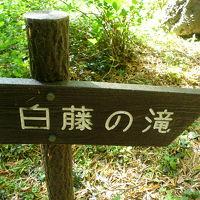 ○ プチハイキングで白藤の滝へ ○