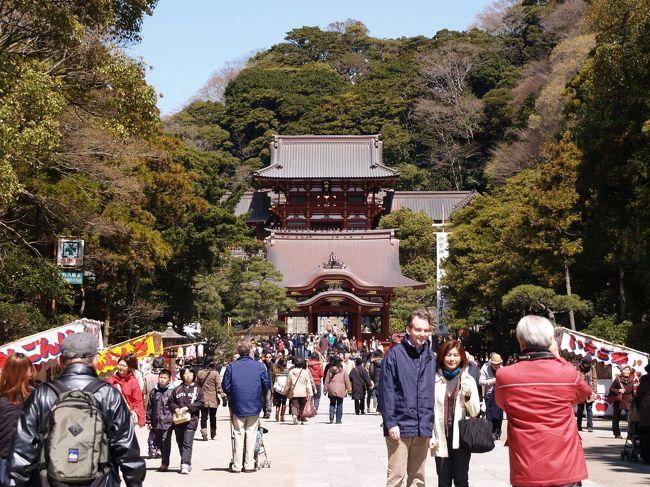 鎌倉が世界文化遺産の暫定リストに掲載されたのが1992年のことだ。鎌倉は世界文化遺産暫定リスト掲載されて今年が20年目にあたる。20年目などというと暫定リストの「暫定」の意味を改めて考えてしまう。奈良、京都を巡っているうちに何故、鎌倉は世界遺産にならないのかと疑問が湧き、鎌倉巡りが始まった。<br /> 日本はユネスコへの援助額が多いからといって、申請した全てが世界遺産にはならないことは、いみじくも平成20年(2008年)7月に登録延期となった平泉が最初に示している。しかし、再度申請し、2011年5月には世界遺産への登録勧告が得られ、今年6月には世界遺産に登録される見通しだ。ただし、この勧告には6つある構成資産のうち柳之御所遺跡の除外が条件となっている。また、考古学的遺跡群を削除すべきだとしている。したがって、構成資産は中尊寺、毛越寺、観自在王院跡、無量光院跡、金鶏山の5つで進められる方向にある。<br /> 平泉の世界遺産登録を機に鎌倉の世界遺産登録活動が本格化するといわれてきた。鎌倉の暫定リストにはWeb(http://www.tpo.jpn.org/cat0003/1000000032.html)で見ると、建長寺、円覚寺、鶴岡八幡宮、法華堂跡、荏柄天神、覚園寺、瑞泉寺、永福寺跡、東勝寺跡、鎌倉大仏殿跡、道路や屋敷跡等の遺構、若宮大路、名越切通、朝夷奈切通、巨福呂坂、亀ヶ谷坂、化粧坂、大仏切通、極楽寺坂、北条氏常盤亭跡、和賀江嶋の21ヶ所が掲載されている。しかし、何とも数が多過ぎる。何もかもではなく、最小限必要な構成資産のみに数を絞るべきである。また、考古学的遺跡群は削除すべきである。<br /> 鎌倉の鎌倉時代に由来する文化遺産としては、(1) 鎌倉の寺社、(2) 武家屋敷、(3) 谷戸、(4) 切通、(5) やぐら、があろう。しかし、(2)は現存していない。また、(3)も鎌倉の寺社を巡り、あるいは(4)を見れば分かるものだろう。したがって、(1) 鎌倉の寺社、(4) 切通、(5) やぐら、に絞るべきである。特に、(4)と(5)は史跡であり、考古学的遺跡群に近いものかも知れない。勿論、(1)から寺跡は除外し、誰もが見て分かるものに限定する。<br /> (1)としては、鶴岡八幡宮と建長寺、鎌倉大仏。仏像が見られる寺として覚園寺(丈六仏)か浄光明寺(半丈六仏)。しかし、見学方法が時間毎の団体行動であり、境内で写真撮影できない覚園寺は外国人に受けないであろう。円覚寺は鎌倉を代表する寺院の1つであり、梵鐘(洪鐘(おおがね)、国宝)もあるが、中心伽藍の仏殿が鉄筋コンクリート造であり、神奈川県唯一の国宝建築物である舎利殿も室町時代のものであり、公開もされていない。したがって、除外するのが適当である。荏柄天神は見るべきところがない。瑞泉寺の庭園は裏山の偏界一覧亭をも含めたものであるが裏山が公開されていないために除外対象とすべきであろう。<br /> (5)としては、朝夷奈切通、化粧坂、釈迦堂口切通と「二階堂切通」。名越切通は鎌倉側の横須賀線トンネル付近が景観をなしていない。大仏切通は長らく閉鎖されていたが、ようやく再会された。しかし、鎌倉時代の掘削かは不明であり、世界遺産には不適当だ。巨福呂坂、亀ヶ谷坂、極楽寺坂は見るべきところがない。<br /> (6)としては、大町釈迦堂口遺跡のやぐら群と瓜ヶ谷やぐら群。百八やぐらは幕末・明治までに安置された仏像に首がなく、不適切であろう。現在でも祭祀されている明月院や海蔵寺のやぐらがあるが、寺の境内にあり、やぐらだけを対象とするのは配慮に欠けるきらいがする。<br /> 他に、若宮大路はコンクリート石積で後世の改竄が多過ぎる。和賀江嶋は水没するために港の遺構としては分かり難い。また、以上の中には、大町釈迦堂口遺跡のやぐら群と釈迦堂口切通が2つに分類分けされているが大町釈迦堂口遺跡にあるものである。<br /> まとめると、鶴岡八幡宮、建長寺、鎌倉大仏、覚園寺か浄光明寺、朝夷奈切通、化粧坂、「二階堂切通」、大町釈迦堂口遺跡(釈迦堂口切通とやぐら群)、瓜ヶ谷やぐら群の9構成になろうか。<br /> 早急な、「二階堂切通」の掘削年代の確定と大町釈迦堂口遺跡と名越亭跡・釈迦堂跡との関連の究明が待たれよう。<br />(表紙写真は鶴岡八幡宮)      <br /><br />