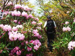石楠花にいだかれて  ~ 春雷の比良山系 堂満岳 ~