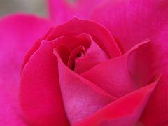 白雪地ビール飲み比べと荒牧バラ公園で美しいバラに癒される旅 ぶらり日本の城めぐりその26<有岡城跡>