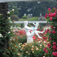 生田緑地 ばら苑 2011