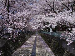 2011 麻生川のさくら