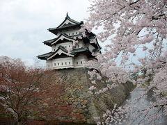 ひと月遅れの満開の桜 弘前さくら祭り