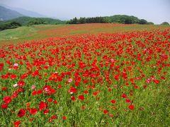 2011.5.21一面の紅い絨毯は日本でないようでした。・・・秩父高原・ポピーまつり