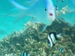 チューク諸島の旅②グアムに1泊イパオビーチでシュノーケル