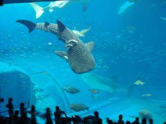 チサンリゾート沖縄美ら海 2011