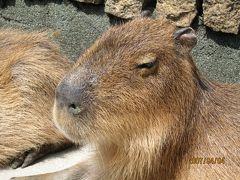 伊豆で動物とふれあう☆2007年4月