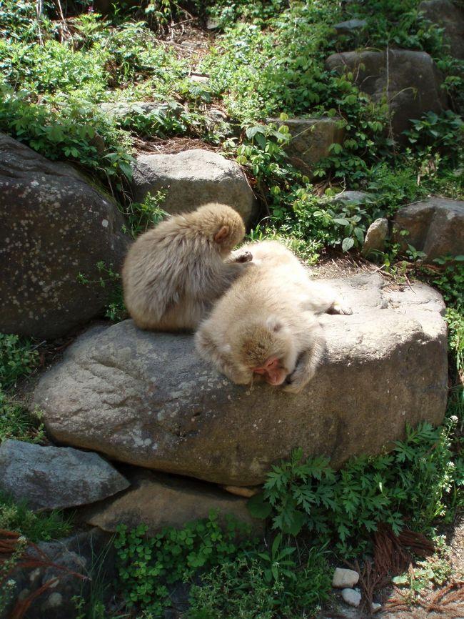 信州中野ICで高速を降り、<br />地獄谷野猿公苑へ。<br />その後、まだ雪がある志賀高原を通り<br />万座温泉へ行ってきました。