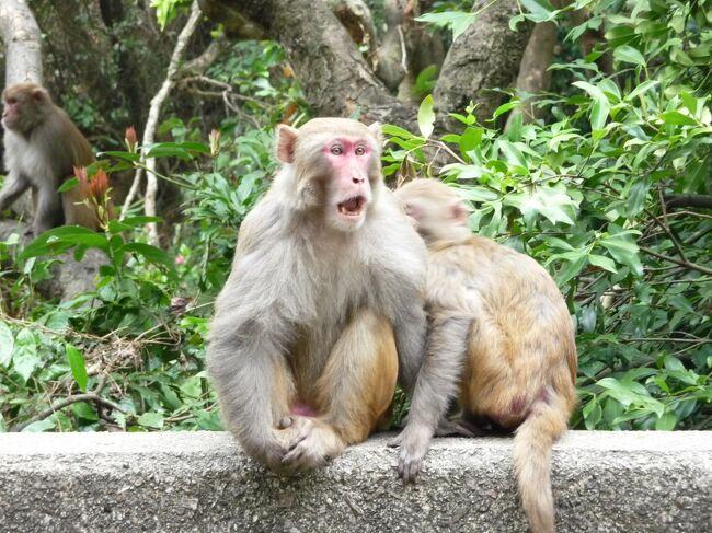 金山郊野公園内に位置する九龍水塘には、野生の猿が群生しています。<br />大埔(Tai Po)方面に行くバス 72番、81番、86B番に乗り金山効野公園で下車。そこからは、ハイキングコースです。その後香港島へ渡りひき続き<br />ハイキングコースである警察博物館へ。