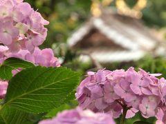 2011 文京区  あじさいまつり 白山神社 下