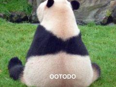 初めてのアドベンチャーワールド パンダ見学