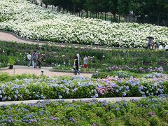 2011梅雨、なばなの里の紫陽花(1)紫陽花鉢展示のトンネル