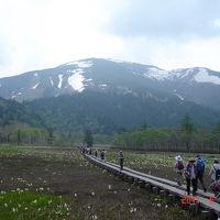 尾瀬ヶ原でフラワーウォッチング [2011](1)